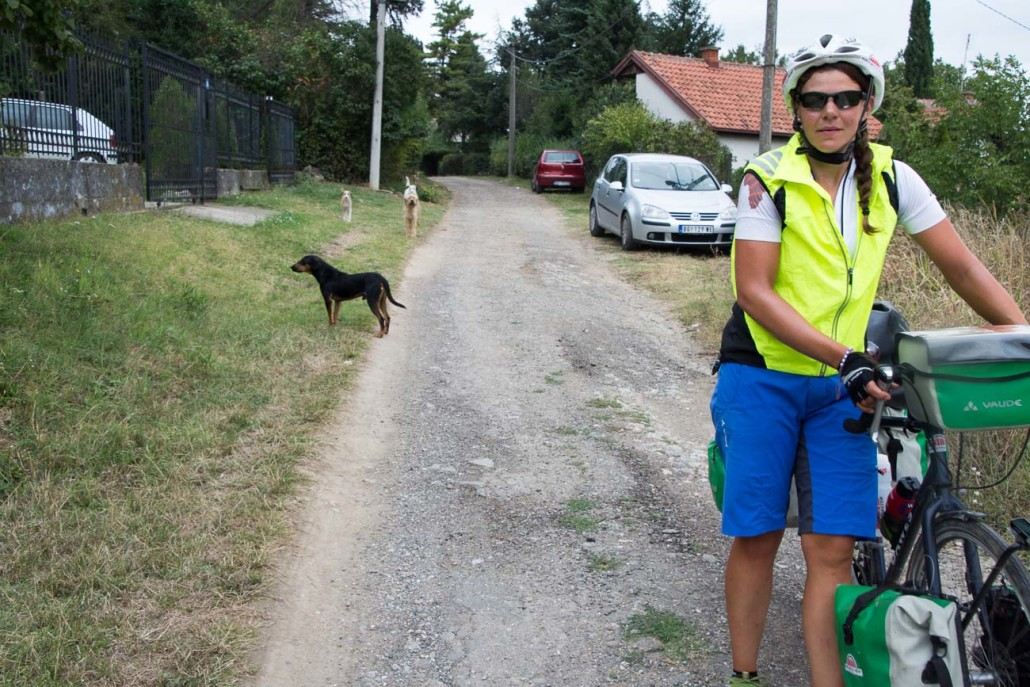 Cycling past Serbia's aggressive dogs