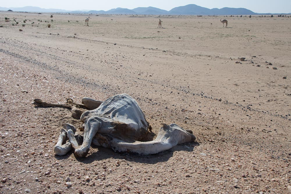A harsh reminder of just how hostile the desert is