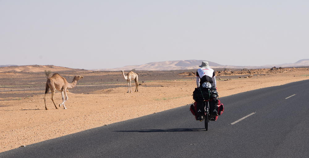 Humps on the road in the Bayuda Desert