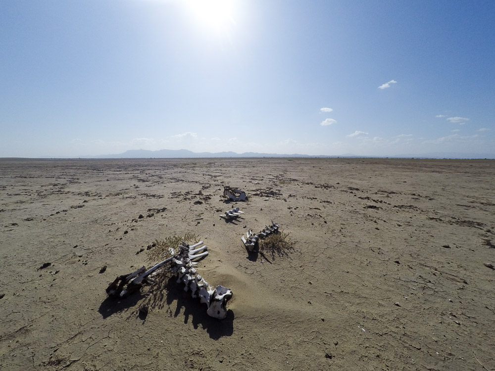 Skeletons in the no-mans-land between Ethopia, Kenya and Sudan